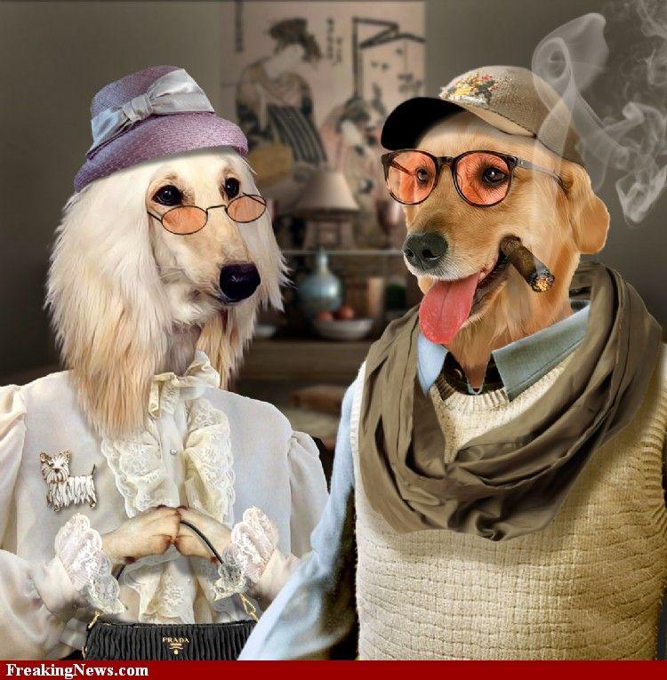 Millionaire Dogs Dressed Up Dog Dresses Up Dog Cute Animal