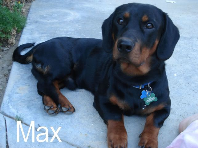 Bassett Hound Rottweiler Mix I M Afraid I M Going To Need One Of