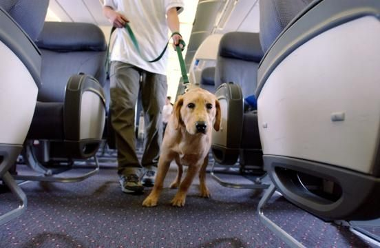 Dfw K9 Crew Implemented New Plan At The Dallas Fort Worth