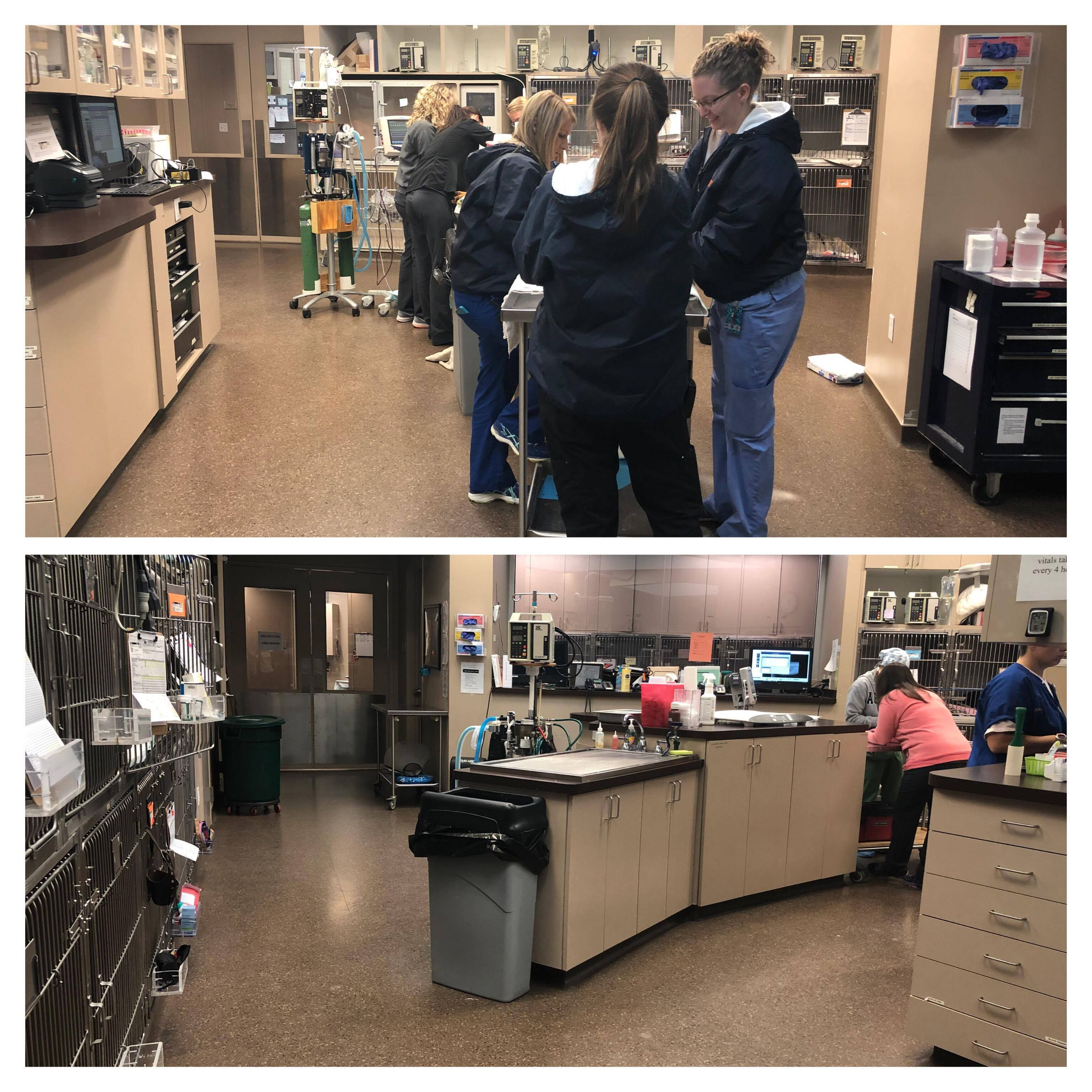 Behind the Scenes Look at Memphis Veterinary Specialists