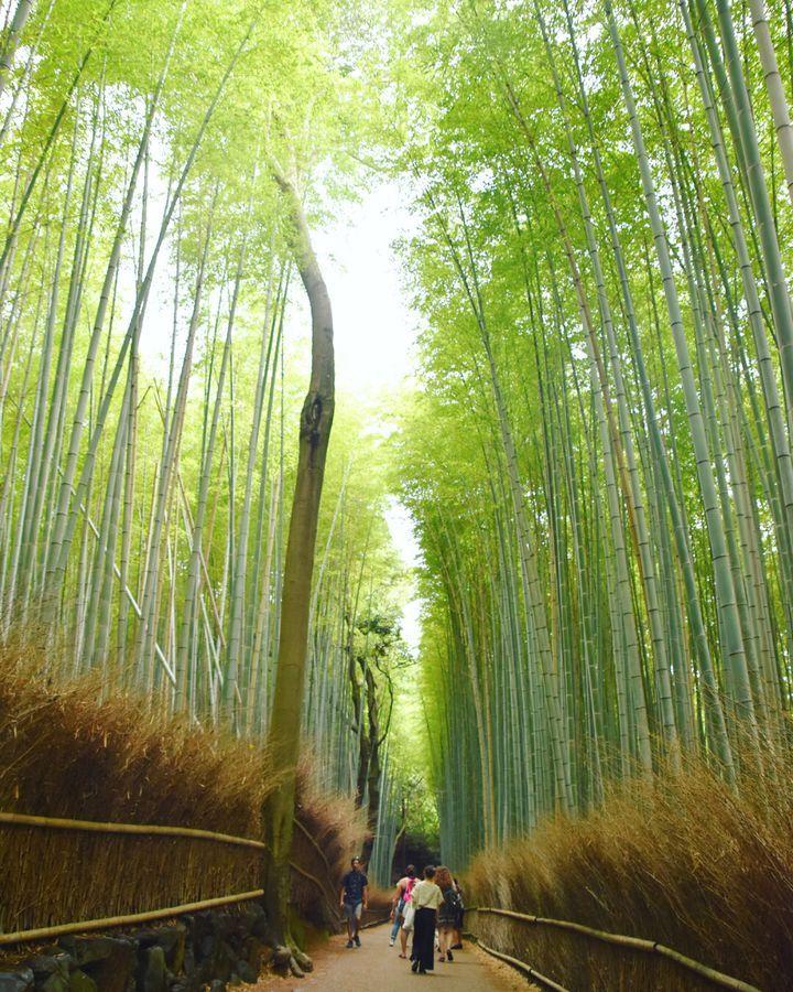 京都・嵐山の魅力を伝えたい!ここに来たら行くべき人気スポット7選 | RETRIP[リトリップ]