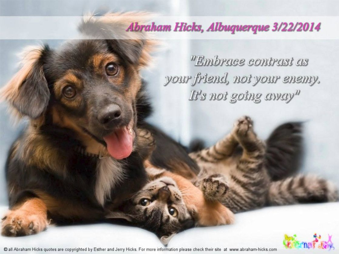 Quotes About Dogs And Friendship Embrace Contrast As Your Friend Not Your Enemyit's Not Going