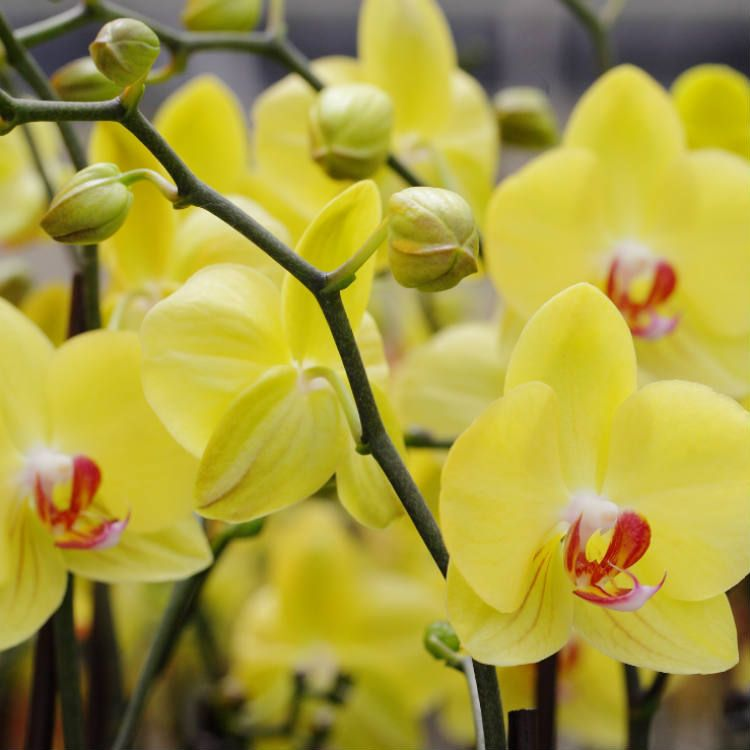 08454000d8be7c14b9b71092e0899311 - How To Get An Orchid To Bloom A Second Time