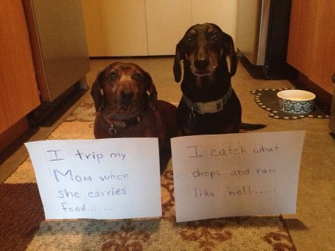 I thought my dogs were the only ones executing this clever ...