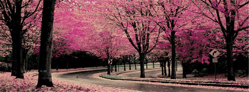 Magic Photo Fb Cover Photo Pink Nature Facebook Covers Pink Nature Cherry Blossom Wallpaper