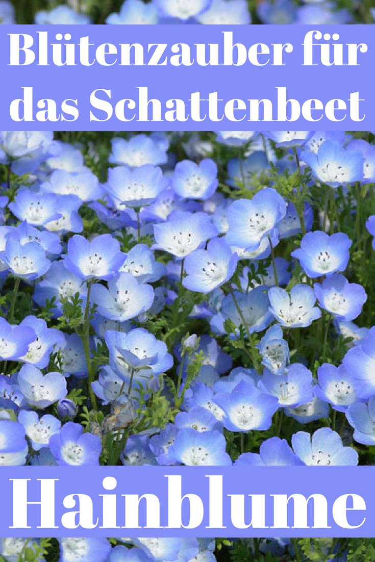 Photo of Schattengewächse | selbst.de