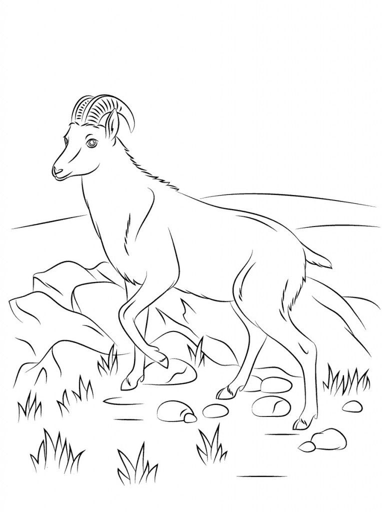 Printable Goat Coloring Pages