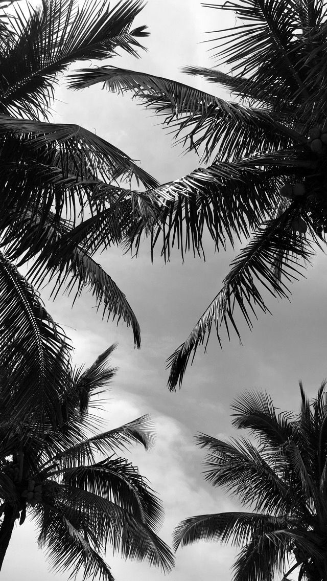 Palms tree black and white flowersbackgroundiphone Palms