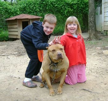 Gotcha Pitbull Puppies For Sale Pitbull Puppies Red Nose