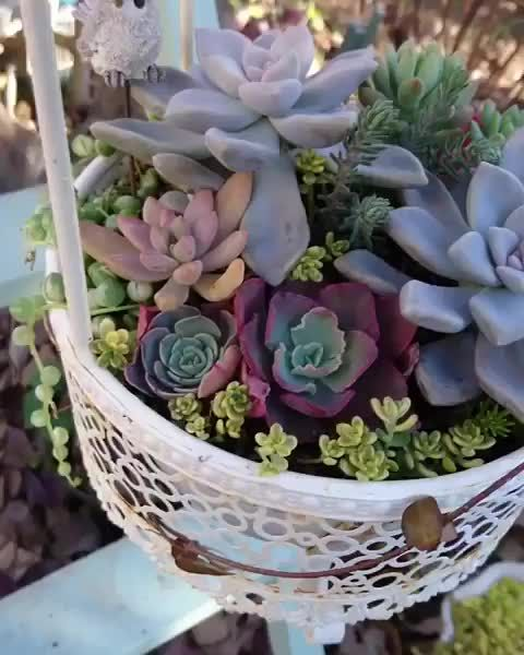 Photo of Look at these color shades! #succulents #succucity