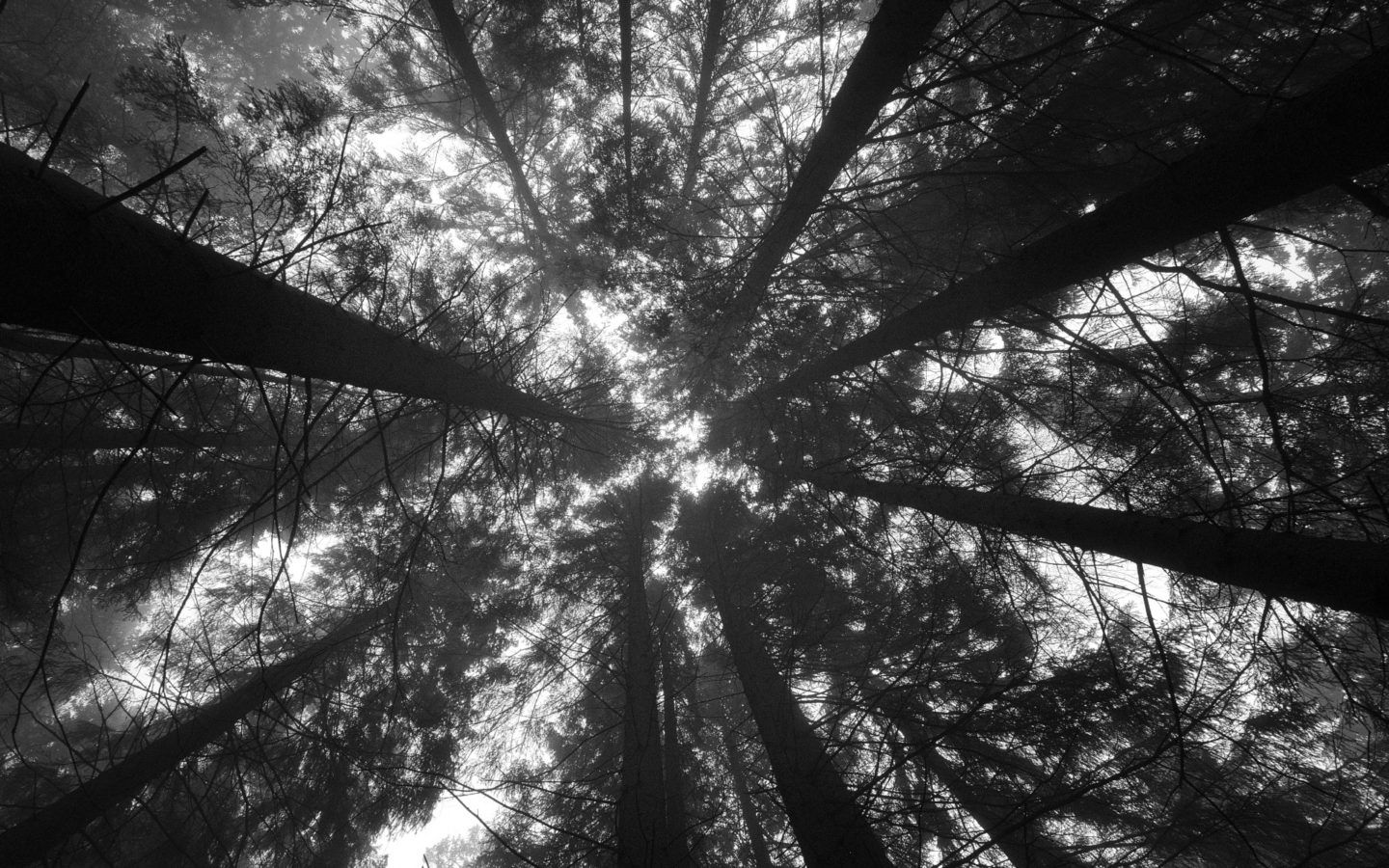 Forest Perspective Black and White WallpapersWebs