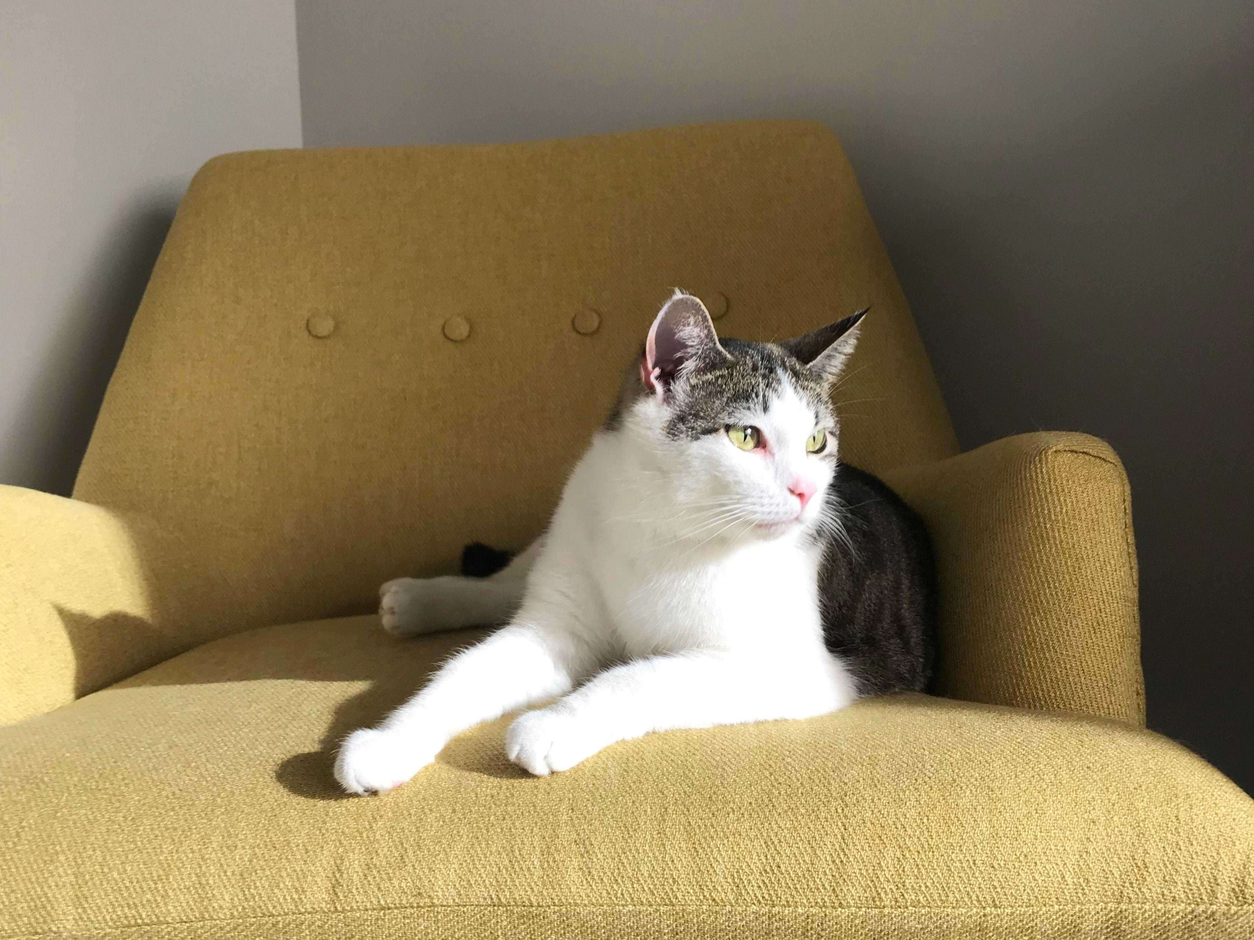 0848ad0610b48a3f0fb7c0148587dba0 - How To Get Rid Of Cat Dander On Furniture