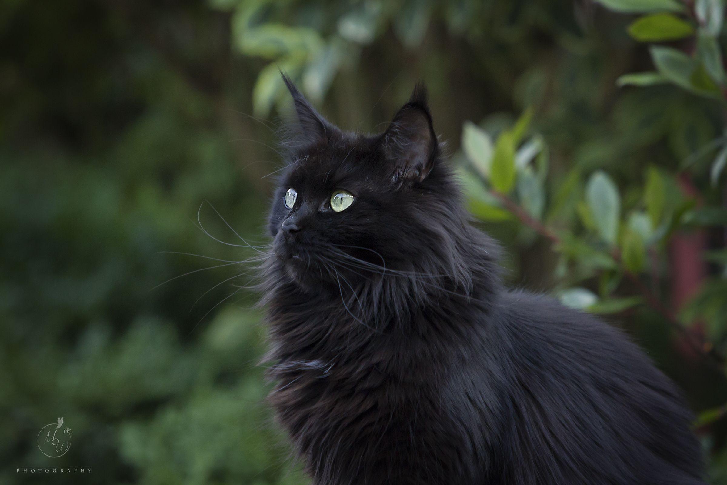 Pin By Darknessfantasy On My Cats Cat Anatomy Warrior Cats Cute Animals