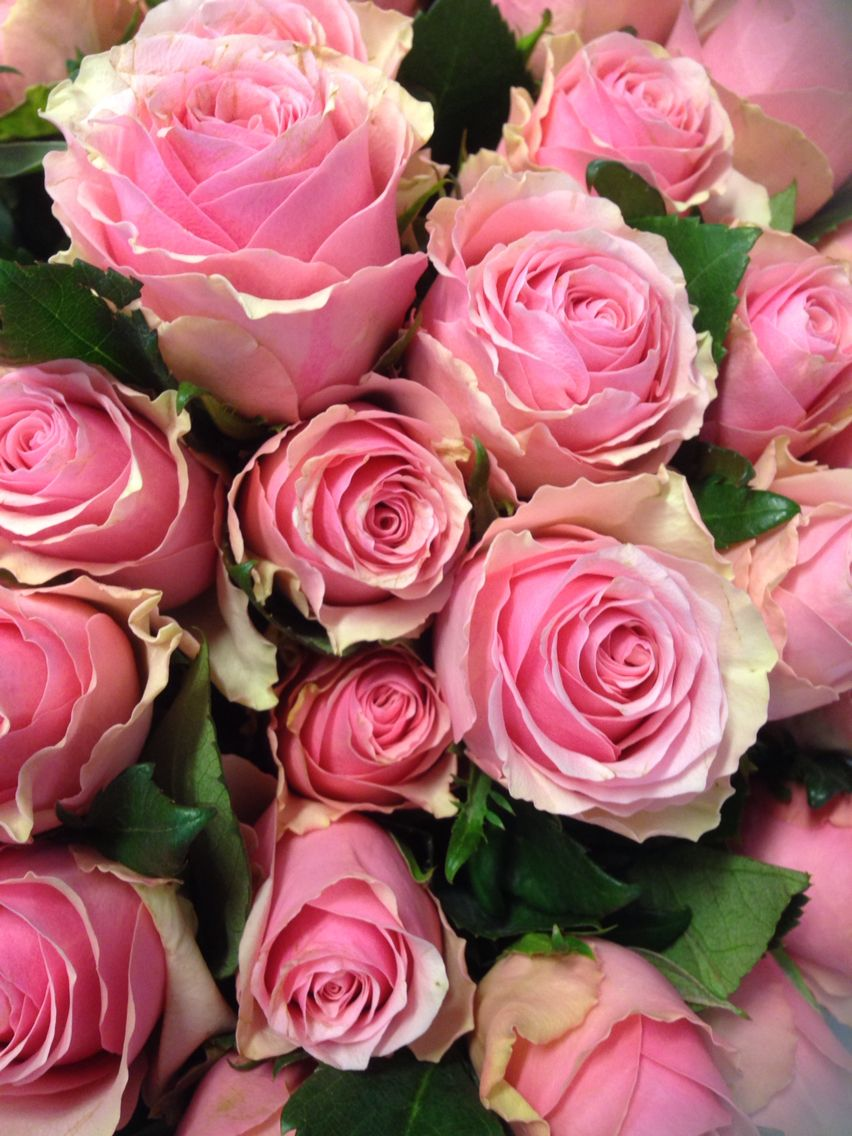 Pin By Rinat Ben Arie On Roses Pinterest Rose And Beautiful Flowers