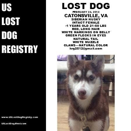 Lostdog 2 24 14 Catonsville Va Purebred Female Red