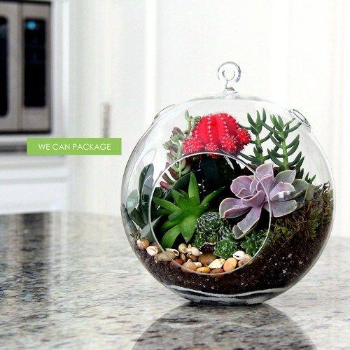8 Inches Hanging Glass Terrarium Succulent Cactus Moss