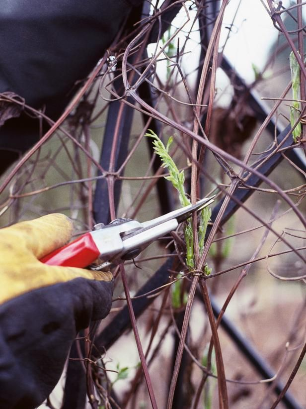 When to Prune Climbing Plants