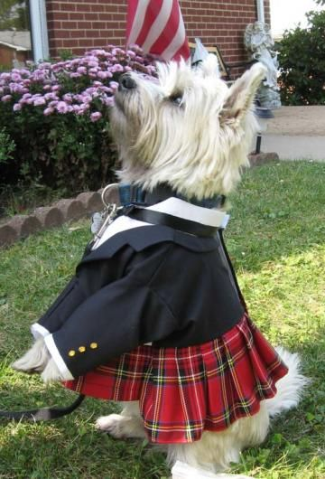 Scottish Kilt for Dogs Featuring Prince Charlie Jacket