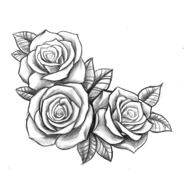 Line Drawing Rose Tattoo : Resultado de imagen para three black and grey roses