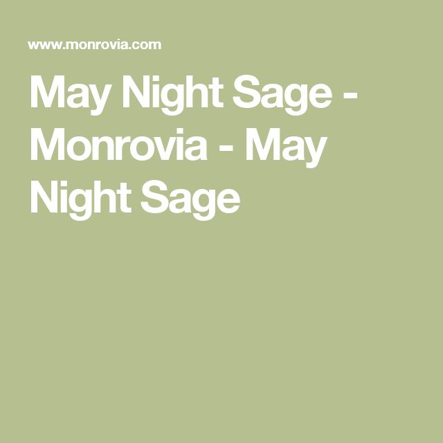 May Night Sage - Monrovia - May Night Sage