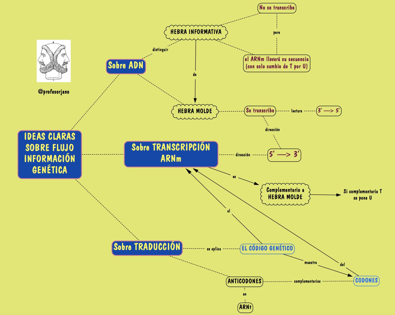 56 best mapas de conceptos y otros grficos biologa bach y para tener ideas claras sobre el flujo de informacin gentica fandeluxe Images