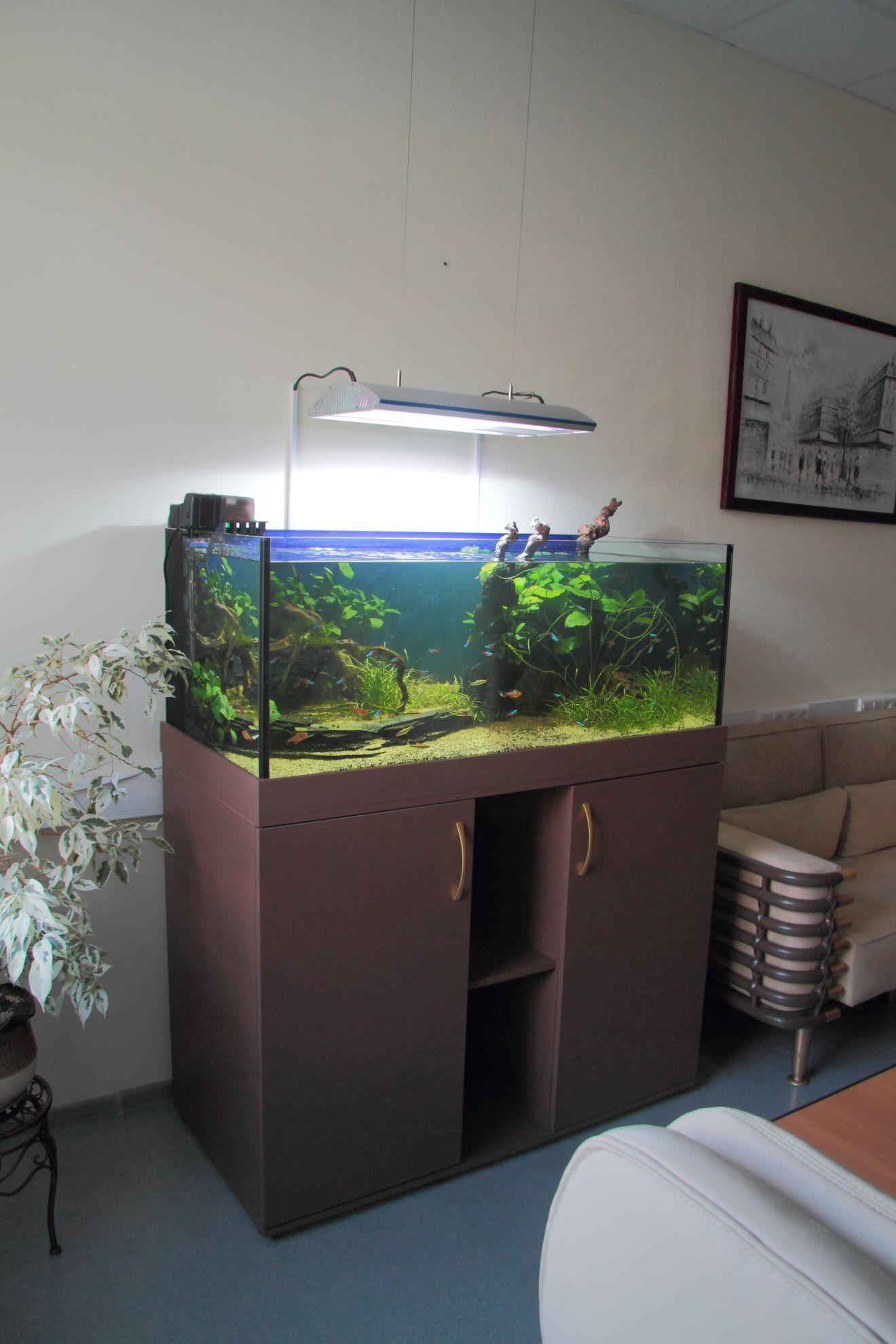 Аквариум в кабинете руководителя akwarium pinterest aquariums