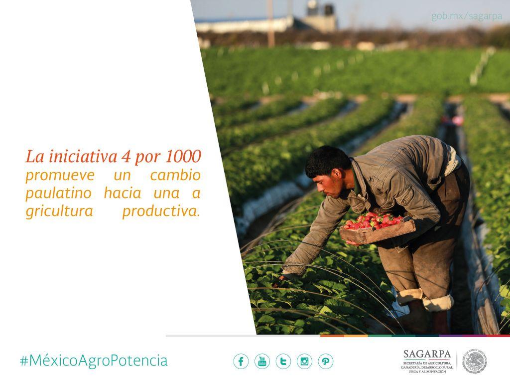 La iniciativa 4 por 1000 promueve un cambio paulatino hacia una agricultura productiva. SAGARPA SAGARPAMX #MéxicoAgroPotencia