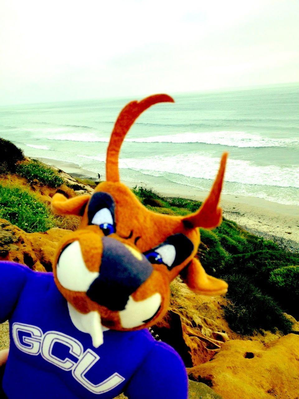 Thunder On The Beach Thundereverywhere Gcu Grandcanyonuniversity Grand Canyon University Pluto The Dog I School
