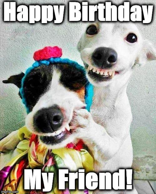 Meme For Birthday Friend In 2020 Happy Birthday Friend Funny Funny Happy Birthday Wishes Happy Birthday Animals