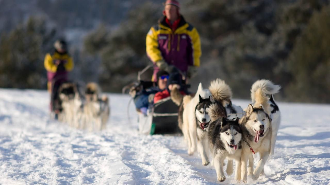 Dog Sledding Dog Sledding Alaska Pictures Leavenworth Washington