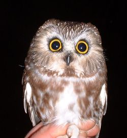 I want to hold an owl! He's precious!