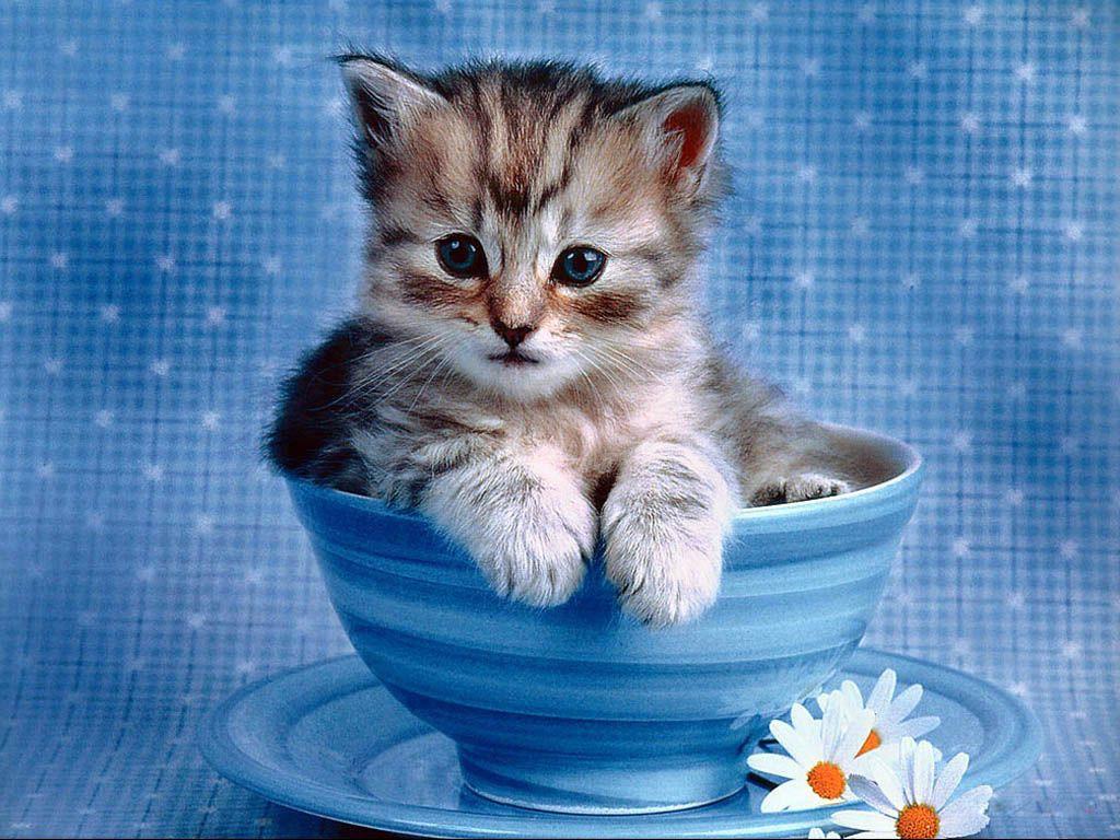 spesso cuccioli di animali - Cerca con Google | Animali | Pinterest  EG55
