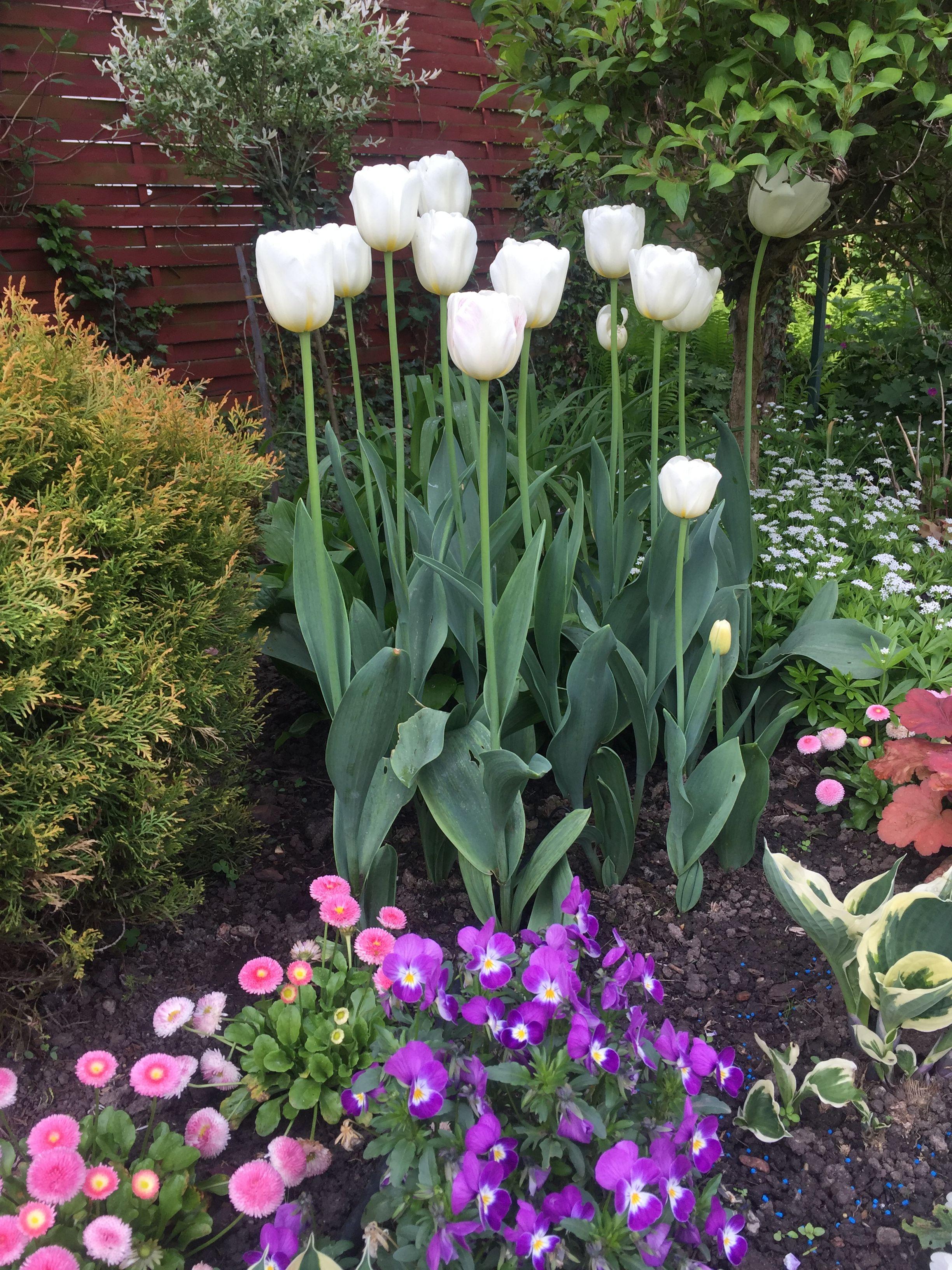 Pin By Hanna Pisarska On Ogrod Flower Garden Plants Flowers
