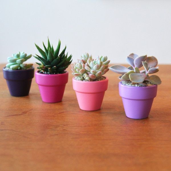 Tiny Colorful Pots With Succulents, Lined Up On A Shelf