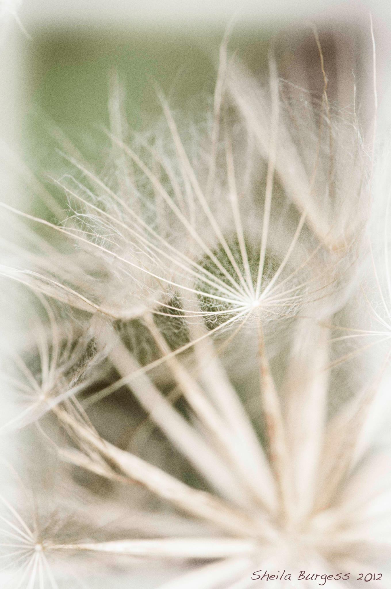 Flowers - Photo by Sheila Burgess