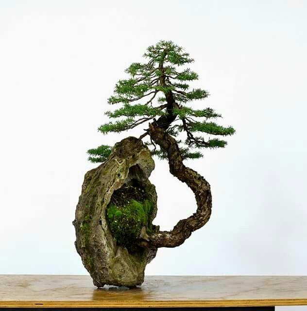 Pin di michael banzai su bonsai pinterest rvores for Alberelli da giardino fioriti
