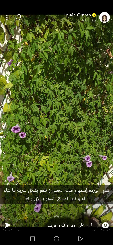 Pin By Sumia Salim On نباتات وأشجار Plants Herbs Garden