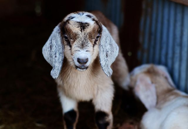 natalie creates: sweet little ones on the farm