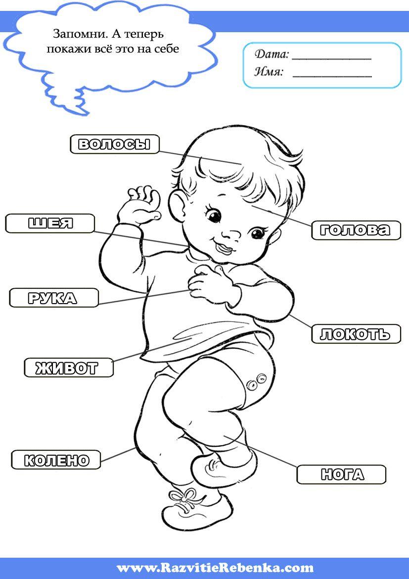 Части тела Человека | Занятия для детей, Тело, Дети