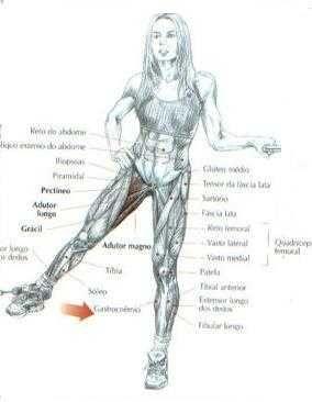Exercicios De Pernas Adutores Com Imagens Exercicio Pernas