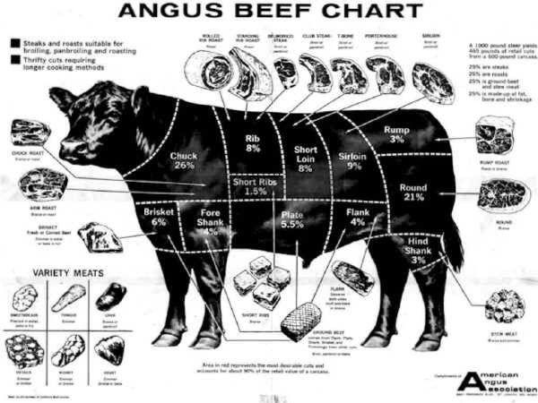 Beef Steer Diagram Steer Poster Ideas Angus Cattle Aberdeen Angus In 2019