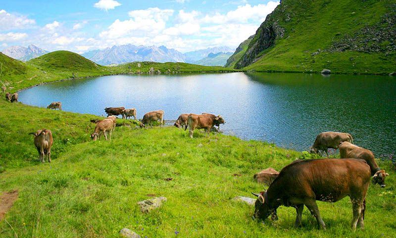paisajes bonitos de primavera verde lago agua natural animales