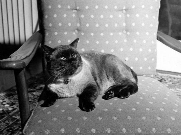 ภาพท คนไทยค นเคย ค ณต โต แมวของ ในหลวง ท คอยเฝ ายามทรงเป ยโน ณ พระตำหน กโลซาน ส ตว ราชวงศ ตาส ฟ า