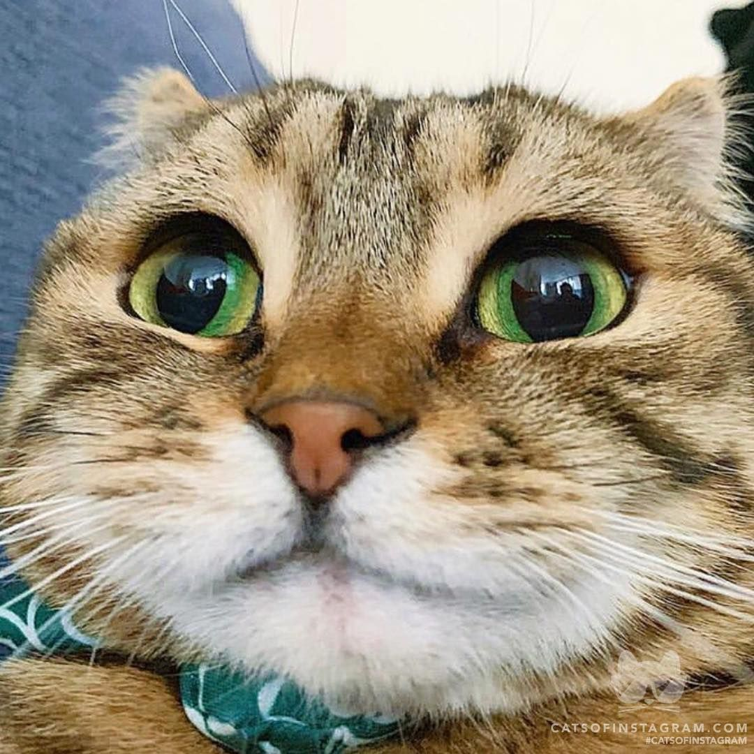 smilehttps//i.redd.it/sbbtzvu4olf21.jpg Funny cat