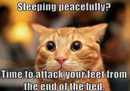 matthew rappaport - Google+ - The CAT NAP you took did not prepare you for CAT SLEEP ! …