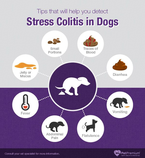 Stress Colitis In Dogs Dog Stress Colitis Dogs