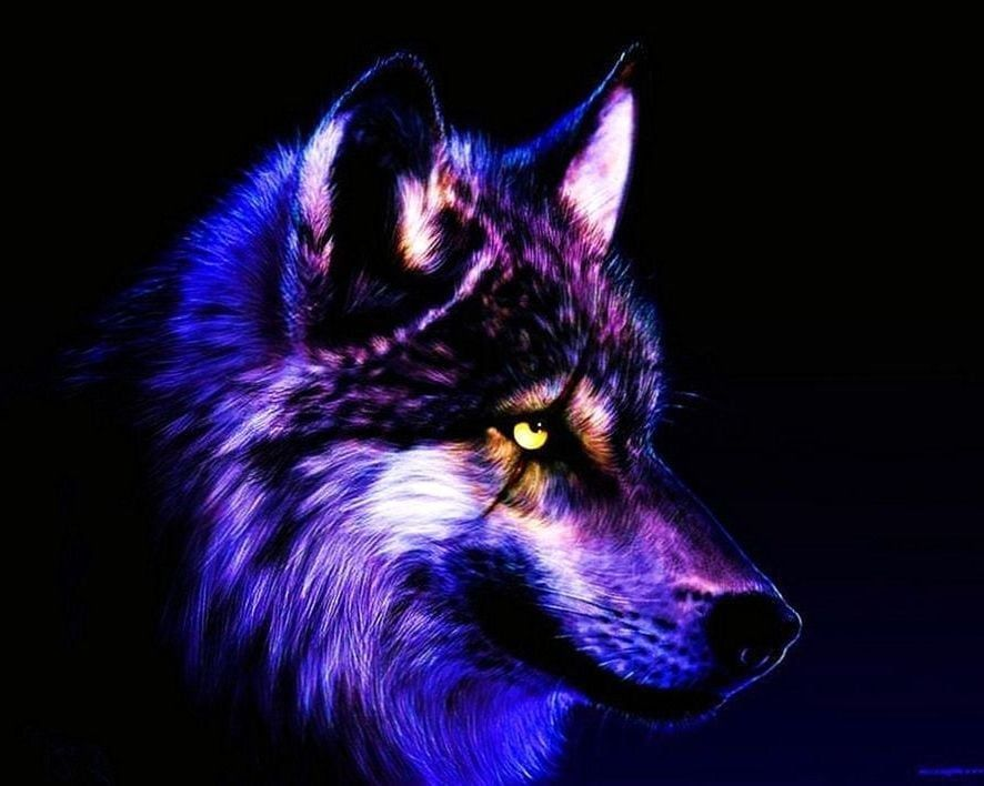Cool Wallpapers Of Wolves Cool Wallpapers Of Wolves Cool Wallpapers Wolf Wolf Images Wolf Wallpaper