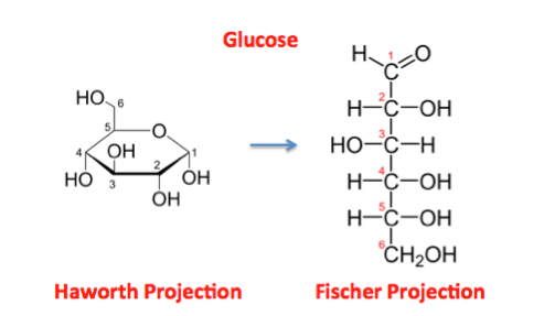Image Result For Monosaccharide Glucose Organic Chemistry Chemistry Haworth Projection