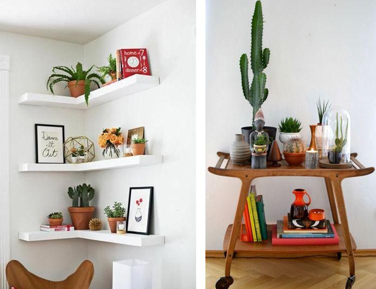 Decorar con cactus y plantas suculentas suculentas for Cactus decoracion
