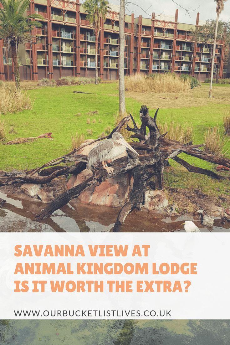Savanna View at Animal Kingdom Lodge Disney world trip